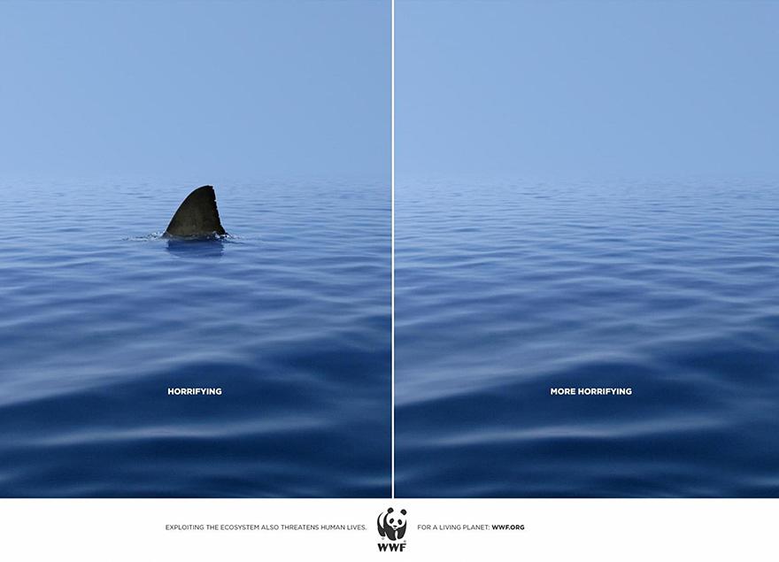 کوسه ترسناک بودن نبودن دریا اقیانوس